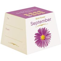 Birth Flowers September