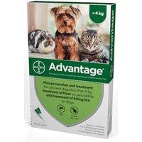 Advantage Flea Control 40 Small Cats Dogs & Rabbits to 4kg (4 pipettes) NFA-DCS