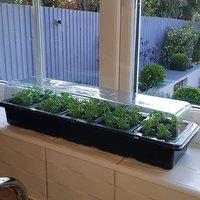 PlantPak Windowsill Propagator kit - 3 sets for 90 plants