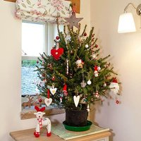 Living Pot-Grown Christmas Tree Norway Spruce 1-1.2M
