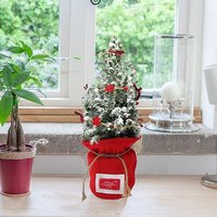 Living Christmas Tree with snow, red sack & garland 50cm