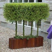 Pair Plaited Willow Bonsai 1L red pots