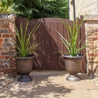 Pair 80-90cm Cordyline Plants with Decorative 36cm vertical