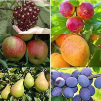 Classic Orchard and Stone Fruit Collections - Buy Both