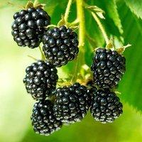 Blackberry PrimeArk 45 9cm