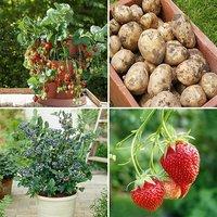 Complete Edible Patio Garden - potatoes, blueberries & strawberries
