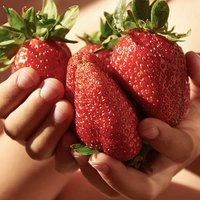 Giant Strawberry Sweet Colossus Plants - Pack of 12 to Grow Your Own