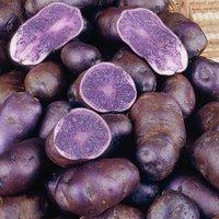 Premium Seed Potato 'Albert Bartlett Purple Majesty' 2kg