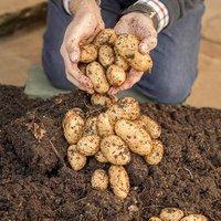 Complete Patio Potato Growing Kit - 3 varieties & Pods