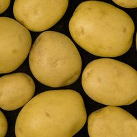 "Seed Potato Albert Bartlett ""Elfe"" 2Kg"