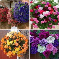 96 Best-Sellers Bedding Plant Bundle - 24 each