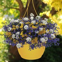 Riverside designer yellow planter 27cm pair