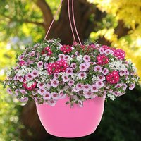 Lipgloss designer mix in pink planter 27cm pair