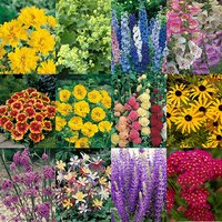 Complete Hardy Garden Perennial Plant collection - 24 plug plants