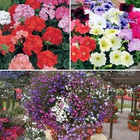 120 Bedding Complete Bedding Plant Bundle