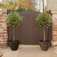 Pair of Holly Standards with Gold effect Planters