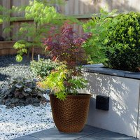 Acer Festival in hammered Gold Planter