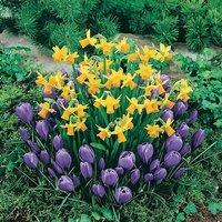 Plant-o-Mat Classic Bulb Planter includes 45  Mixed