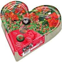 Heart-O-Mat Gift Bulb Kit