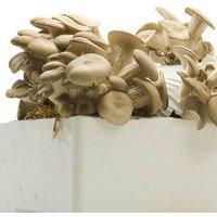 Mushroom Kit - Shiitake Mushrooms 7.5L