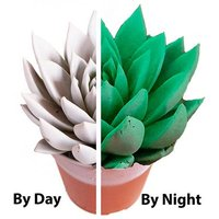 Glow in the Dark Plant 12cm