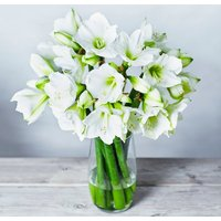 White Amaryllis - ready to arrange White