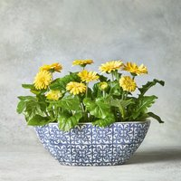 Summer Gerbera Planter Yellow or orange