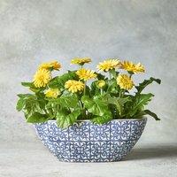 Summer Gerbera Planter Yellow or orange