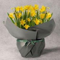 British Narcissi Bulbs Planter White