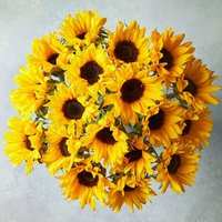 Medium British Sunflowers Yellow or orange