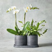 Mini Twin Stem Orchid Duo Jar White