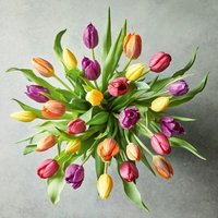 Medium British Tulips - ready to arrange Vibrant