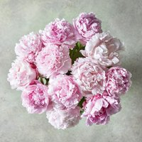 Scented British Peonies Posy Pink