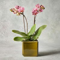 Mini Twin Stem Orchid Planter Pastel