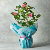 Mother's Day Extra Large Planter Mixed