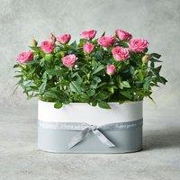 Rose Planter Pink