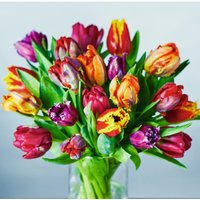 Speciality Tulips Collection - ready to arrange Vibrant