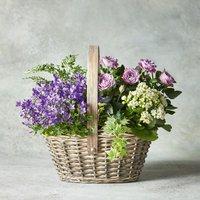 Mixed Planted Basket Mixed vibrant