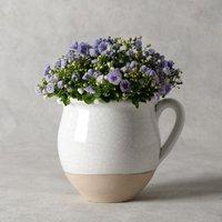 Campanula Jug Purple, lilac or blue