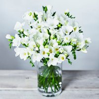 White Scented Freesias - ready to arrange White