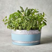 British Herb Garden Planter Foliage