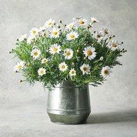 Marguerite Garden Planter White