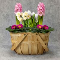 British Spring Plant Gift Basket Purple, lilac or blue