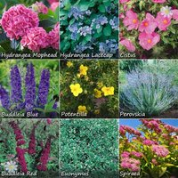 Complete Hardy Shrub bundle - 10 plants
