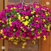 Summer Scorcher Designer Basket Plant Mix - pack of 18 plants