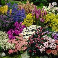 Lucky Dip End Of Season Perennial 12 Plant Deal