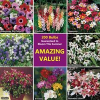 Bumper Pack of 200 Summer Flowering Bulbs