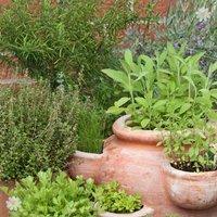 New Kitchen Garden Herb collection - 12 plugs