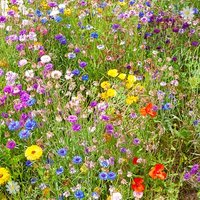 Butterfly & Bee Booster Seed Carpet 2M x 48cm