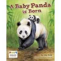 'A Baby Panda Is Born